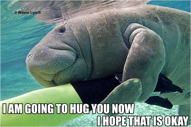 Calming Manatee would like to give you a hug.
