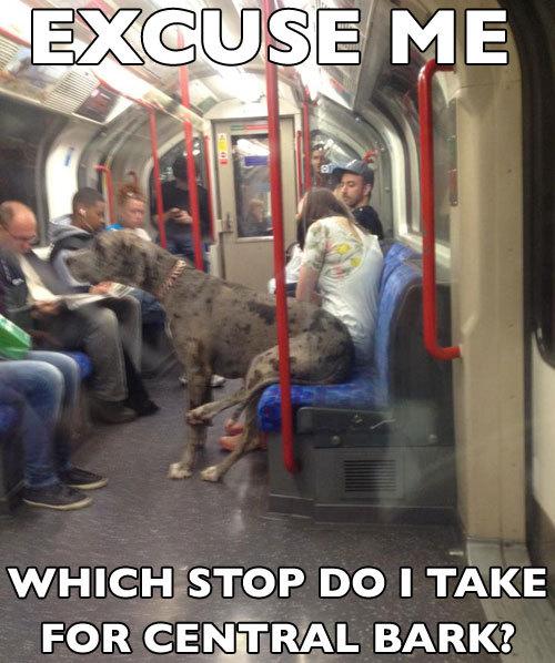 pleatedjeans: subway dog | pic via
