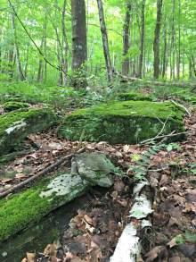 Moose Farm Forest