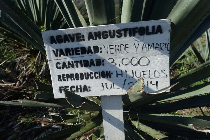 Photo of sign with agave name, variety, number and other information