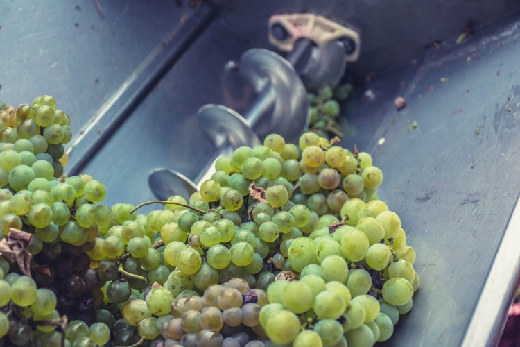 Whole white grapes with a crushing blade behind them
