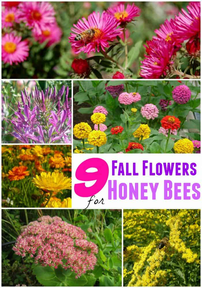 9 Fall Flowers For Bees To Help Them Overwinter This Year