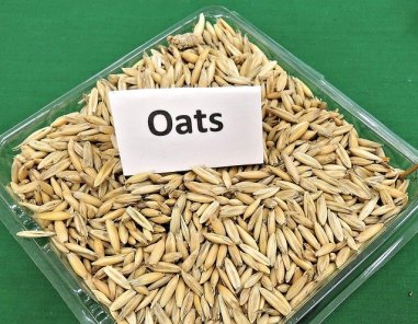 oats. beta glucans, mushrooms, yeasts, fungi, coronavirus