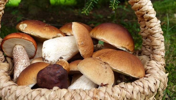 mushrooms, mushrooms burn fat, weight loss, mushrooms weight loss, burn fat