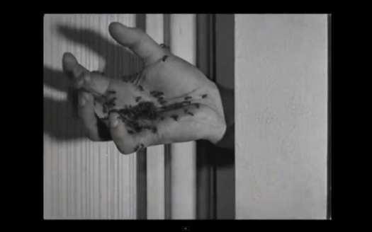 ant-hand