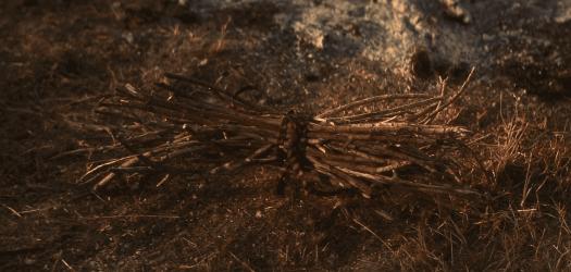 straight-story-sticks