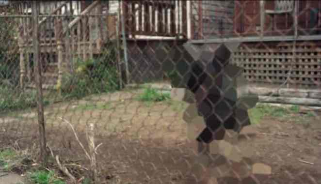 A dog is blurred behind a fence