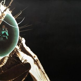 a fly with a man reflected it in its eyeball