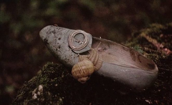 A snail sits on a shoe in the woods
