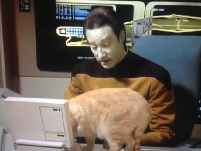 Data with his cat
