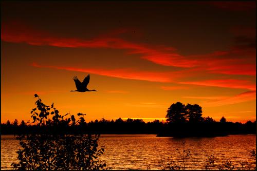 Seney Refugio de Vida Silvestre es un buen lugar para observar la vida silvestre, a salir a la naturaleza e ir a explorar.  Invierno, primavera, verano y otoño, salir y disfrutar de todos ellos.  Situado en el centro de la hermosa península superior de Michigan, hay muchas maneras de experimentar el Refugio.  Si a usted le gusta conducir el recorrido auto-guiado automático, pase por el centro de visitantes, los senderos a pie, ir de caza o la pesca, tomar fotografías, canoa, kayak, raquetas de nieve, esquí, o participar en un evento especial o un programa, el Refugio es un lugar maravilloso para visit.Photo: Atlee Hart - USFWS