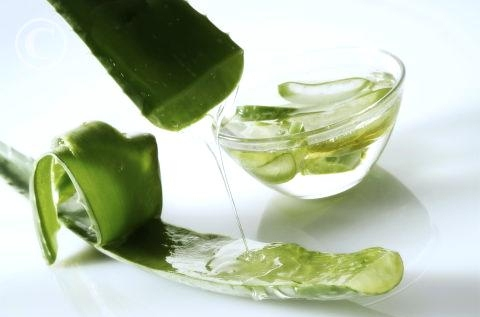 Aloe Vera to relief joint pain - 265article.com
