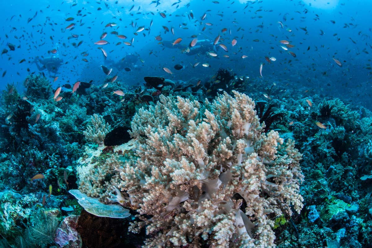 10 Easy Steps To Protect Coral Reefs Scuba Diver Life