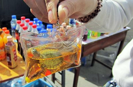 leisure-:  jasmine-blu:     In China, live animals such as turtles and fishes are sealed inside plastic pouches to be used as keychains. Exposed to harsh dyes, the animals soon suffocate and die. This is 100% legal and becoming increasingly popular. REBLOG to spread the word and put a stop to this cruel practice.