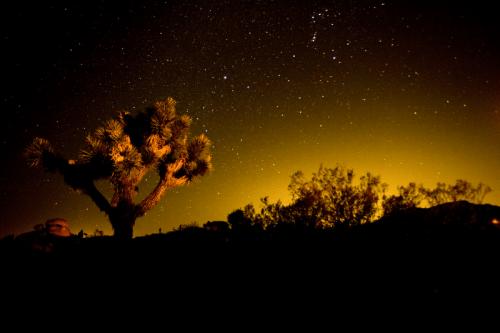 Visto desde la carretera, Parque Nacional Joshua Tree en California sólo se hace alusión a su vitalidad.  Un examen más detenido revela una fascinante variedad de plantas y animales que habitan en esta tierra formada por los fuertes vientos impredecibles, torrentes de lluvia y los extremos climáticos.  Los cielos oscuros de noche, una rica historia cultural y surrealistas características geológicas añadir a la atracción de este lugar.  Venga a ver por ti mismo de la Foto: Troy Duncan - Servicio de Parques Nacionales!