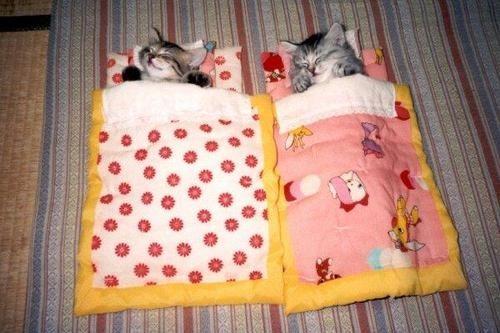 rav3nnoir:  Kitten Sleeping Bags.  awwwww
