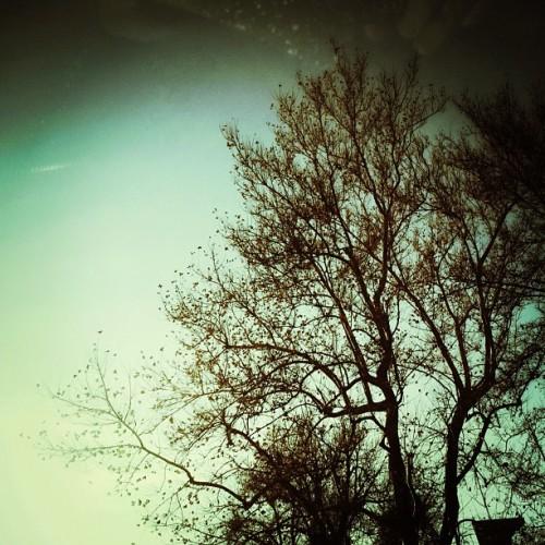 Not yet twilight