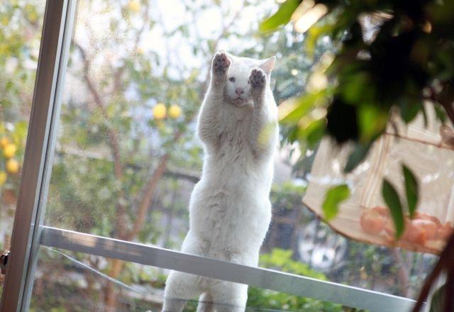 「庭猫」のやってくる自然体の暮らし-『庭猫』カメラマン安彦幸枝さん<前篇>