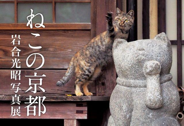 ねこの京都