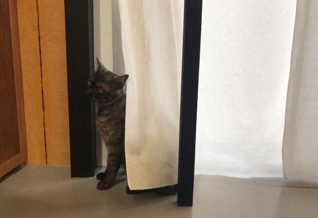 【妄想デート】今日、世界猫の日なんだって!じゃあちょっとお散歩がてら猫のイベント行ってみようか?