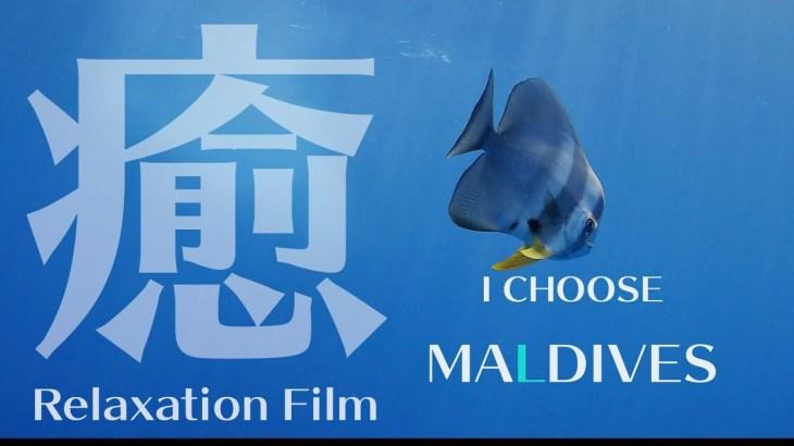 【癒しの音楽と水中映像】モルディブ 自然音 サンゴ礁 熱帯魚 /【Relaxation film】Beautiful Maldivian times.18min【4K】