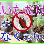【メリットしかない】ゴキブリを寄せ付けない最強植物【アロマティカス】