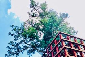 五ケ山ベースキャンプ,五ケ山,福岡,佐賀,montbell,モンベル,キャンプ,愛しとーと,五ケ山豆腐,