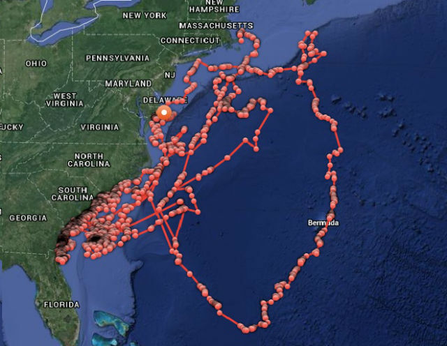 Great White Shark Cape Cod Tracking