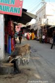 The holy hindu city of Pushkar
