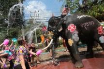 songkran-elephants3