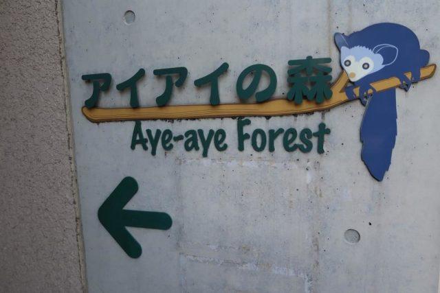 Aye Aye Forest Ueno Zoo
