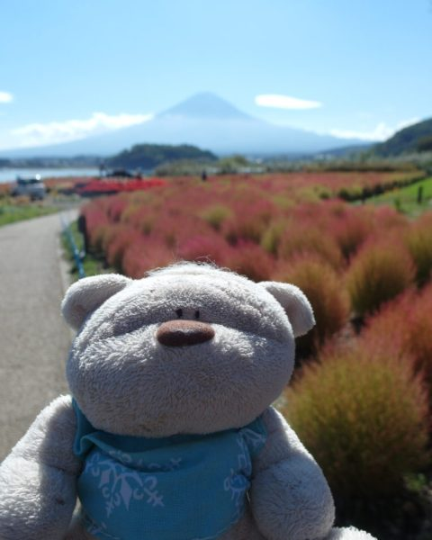 Garden Mount Fuji View Kawaguchiko Natural Living Center