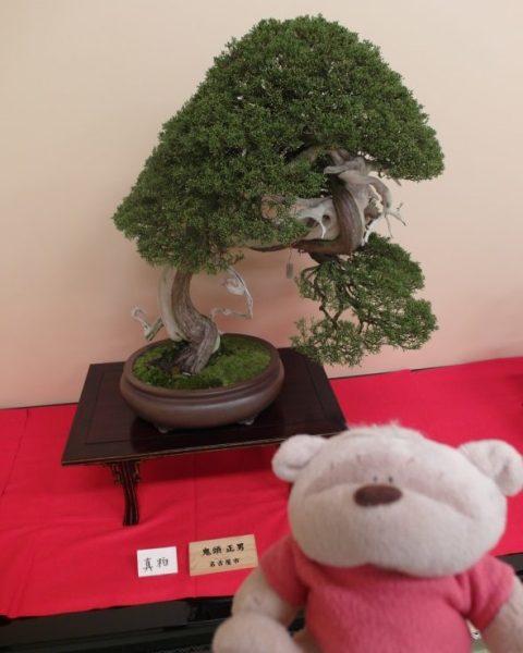 Hanging Bonsai in Honmaru Palace Nagoya Castle