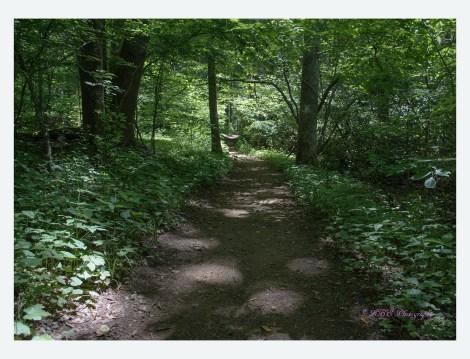 Peg Leg Mine Trail