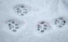 footprint-cat-9353