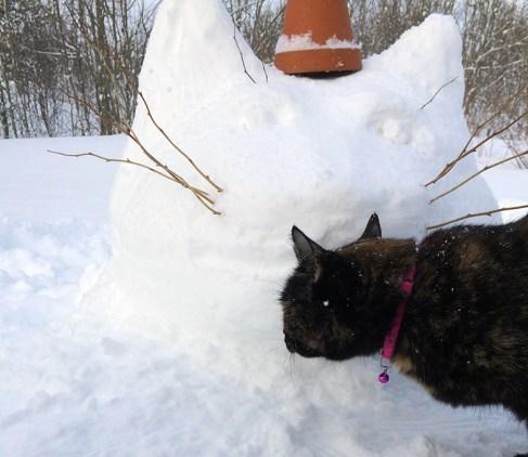 cat_head_snow_4