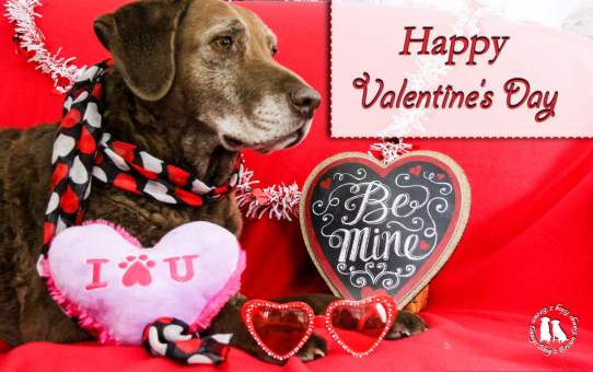 Valentine S Day Dog Treats Archives 2 Brown Dawgs Blog