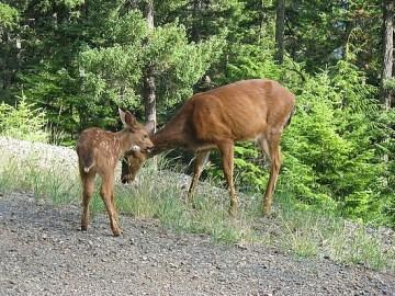 3.1247643643.bambi