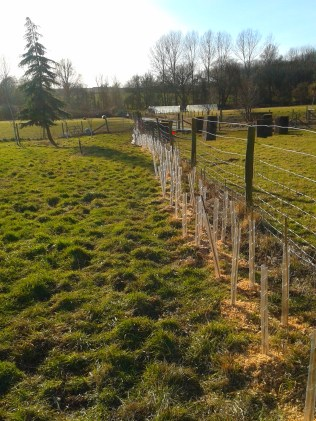 planting a new hedge