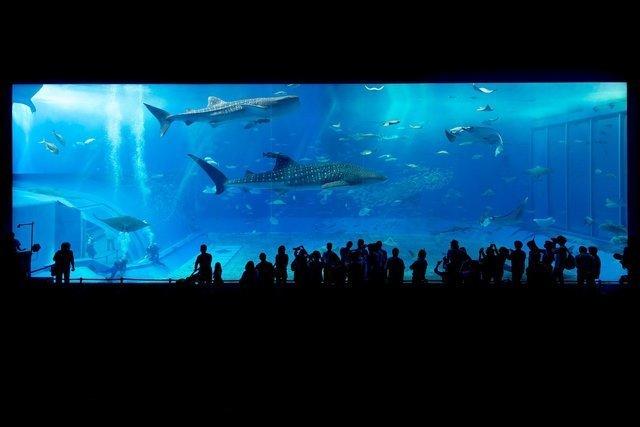 aquarium-725798_1280.jpg