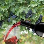 A Versatile Wine – 2011 Navarro Correas Malbec