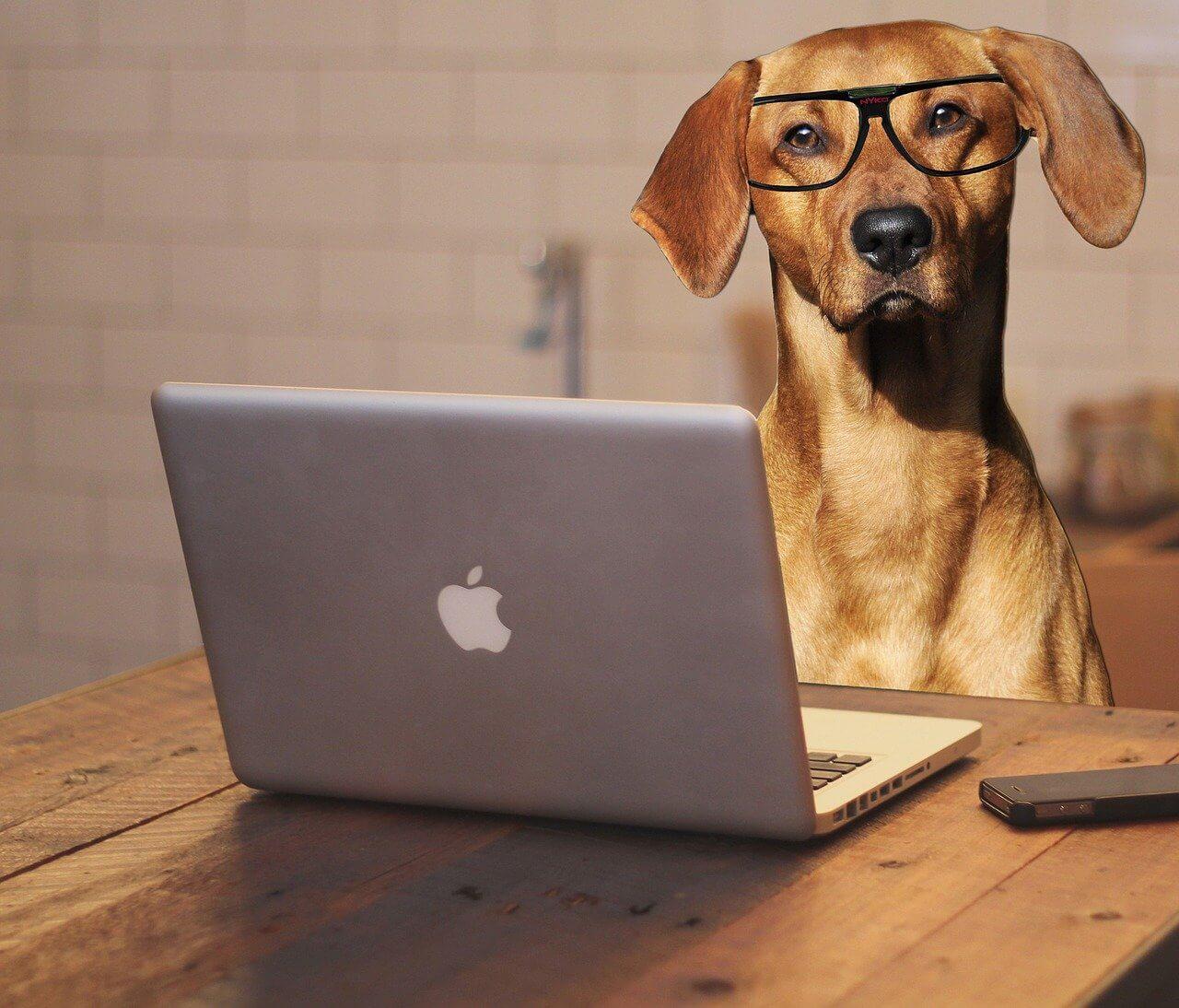 dog wearing glasses working on macbook