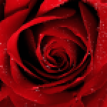 Roses Jigsaw Puzzles APK MODs Unlimited Money Hack Download for android