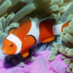 Underwater Jigsaw Puzzles APK MODs Unlimited Money Hack Download for android