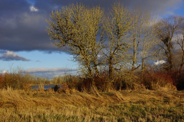Stormy skies, Fern Hill Wildlife Refuge, Forest Grove, OR