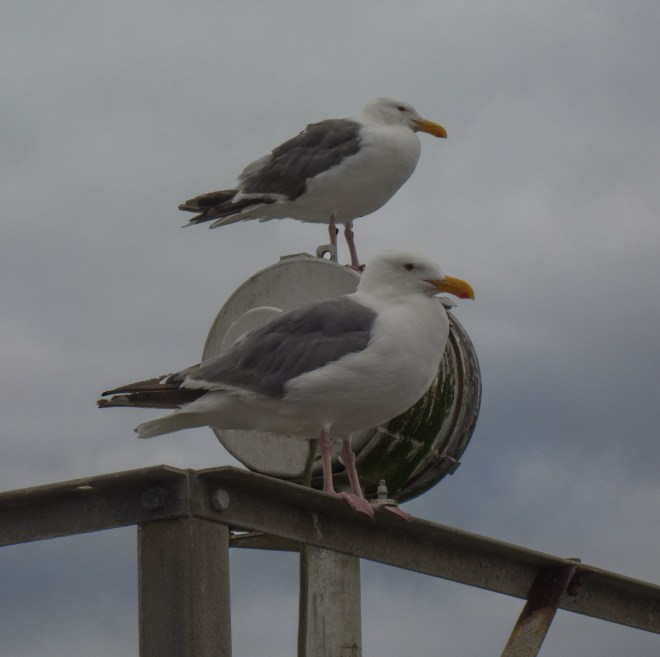Two seagulls keeping an eye on things along the Coquille River in Bandon, Oregon