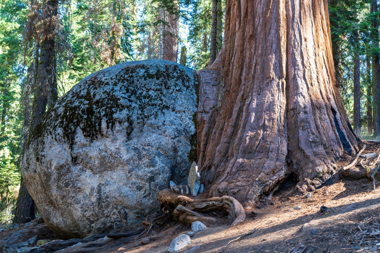 Giant Sequoia and Giant Bolder existing side-by-side
