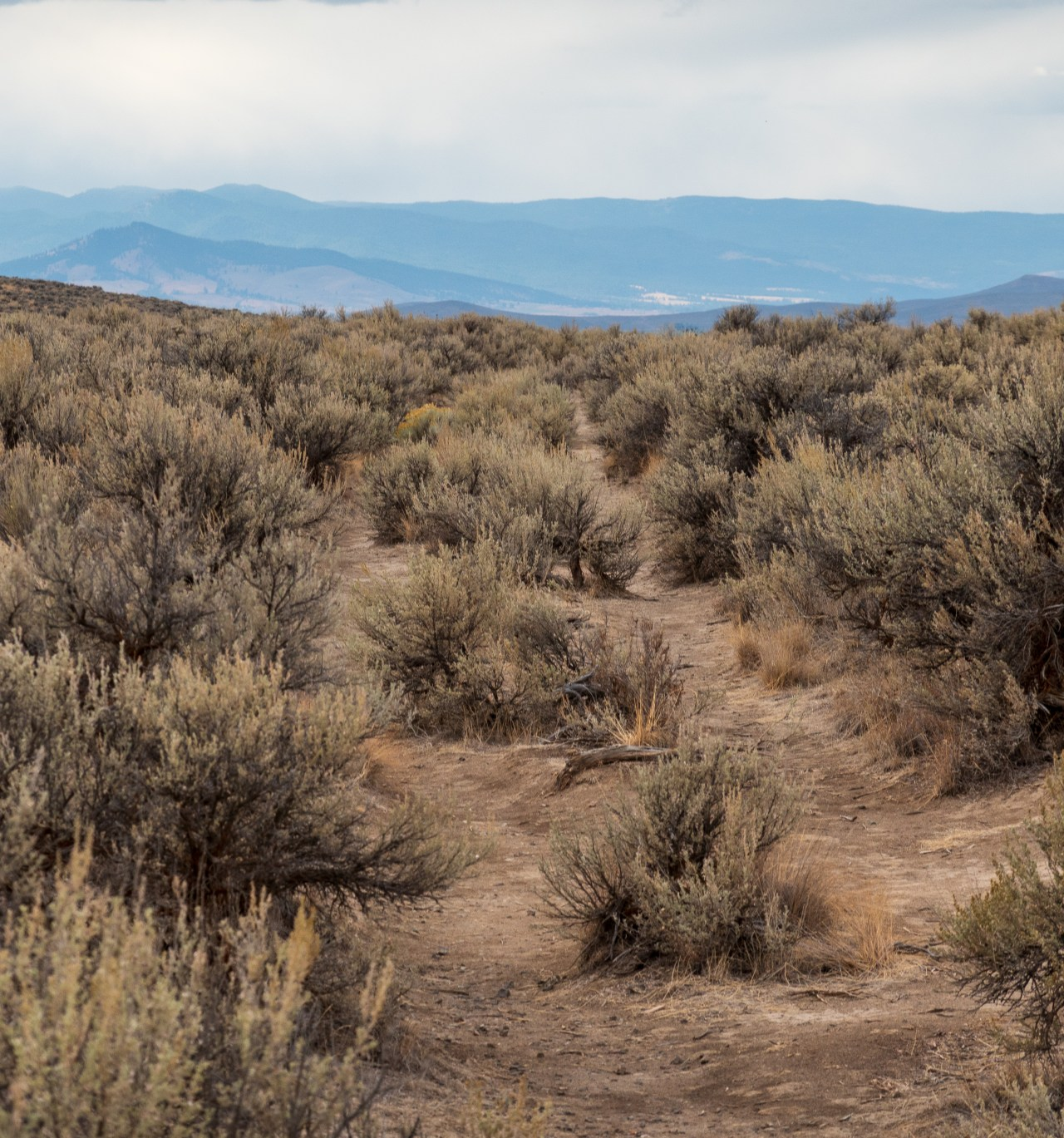 Original Wagon Ruts on the Oregon Trail