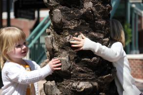 Barnen har hittat en palm i centrala Tampa