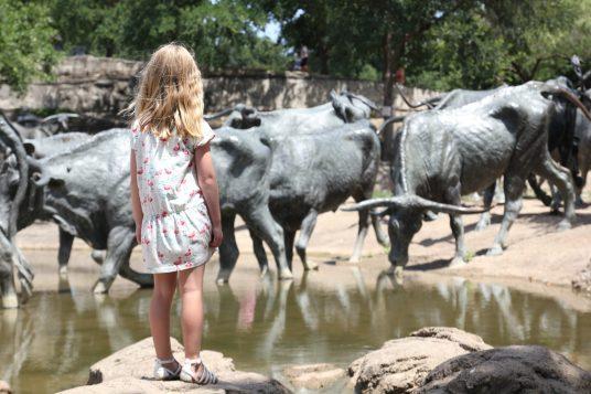 Pioneer Plaza i Dallas, 49 longhornskulpturer i naturlig storlek